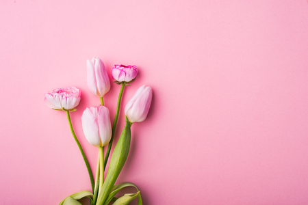 Pink flowers on a pink background. Flat Lay. Copy space.