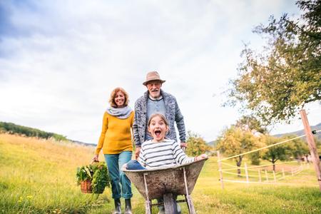 Ältere Paare mit der Enkelin, die im Hinterhofgarten im Garten arbeitet. Standard-Bild
