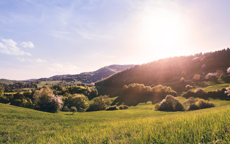 Panoramic view of landscape of meadows and woodland. Sunset in nature. Stock Photo