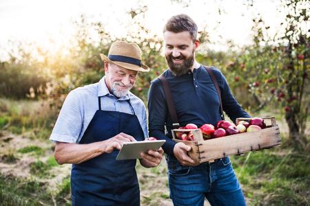 Un homme âgé et son fils adulte avec une tablette debout dans un verger de pommiers à l'automne.