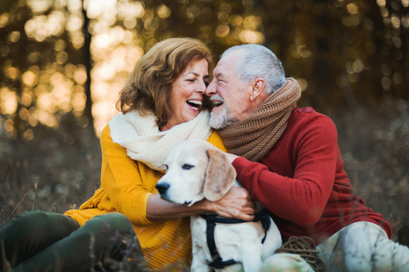 A senior couple with a dog in an autumn nature at sunset. Stok Fotoğraf