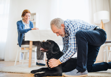 A happy senior couple indoors with a pet dog at home. Reklamní fotografie