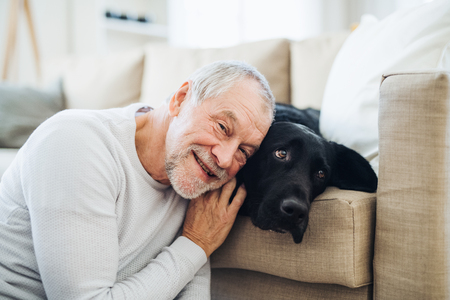 A happy senior man playing with a pet dog indoors at home.
