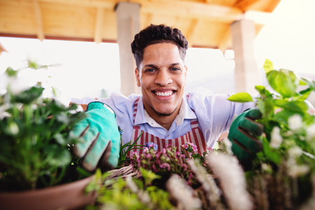 A portrait of young man gardener indoors at home, planting flowers.
