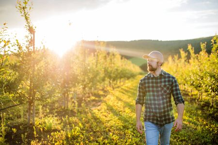 A mature farmer walking outdoors in orchard at sunset. Copy space.