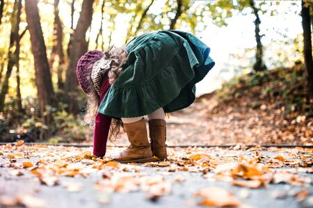 A rear view of small toddler girl playing in forest in autumn nature, playing.