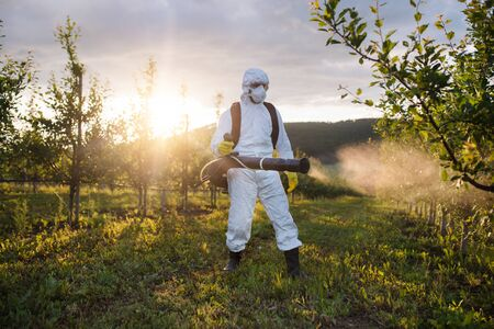 A farmer outdoors in orchard at sunset, using pesticide chemicals. Foto de archivo