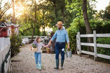 A father with small daughter walking outdoors on family farm, holding hands. Stockfoto