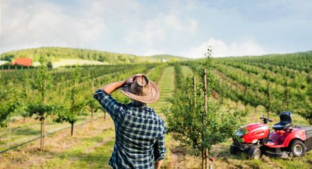 Rear view of farmer walking outdoors towards mini tractor in orchard. Stockfoto