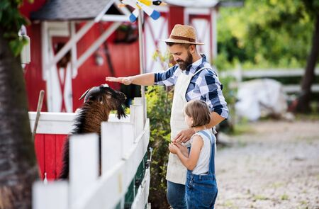 A father with small daughter outdoors on family ranch, feeding animals.
