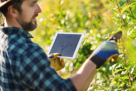 Mature farmer with tablet standing outdoors in orchard, trimming trees. Stockfoto