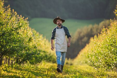 A mature farmer walking outdoors in orchard. Copy space.