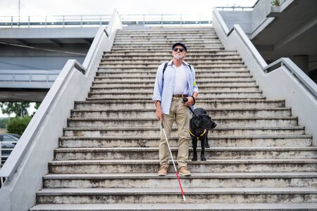 Senior blind man with guide dog walking down the stairs in city. Stock fotó