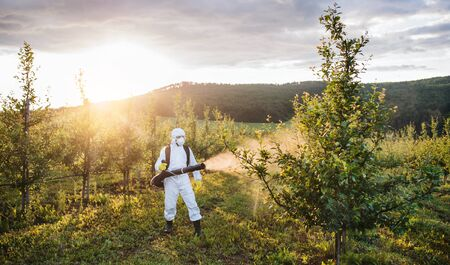 A farmer outdoors in orchard at sunset, using pesticide chemicals. Stock Photo
