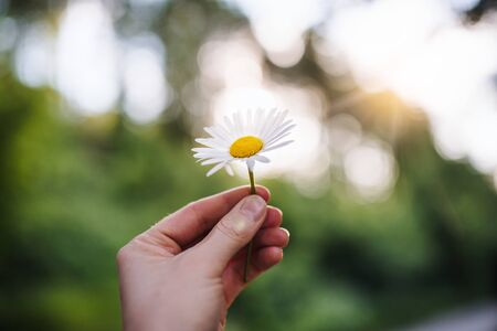 Close-up of female hand holding a daisy flower outdoors in nature.