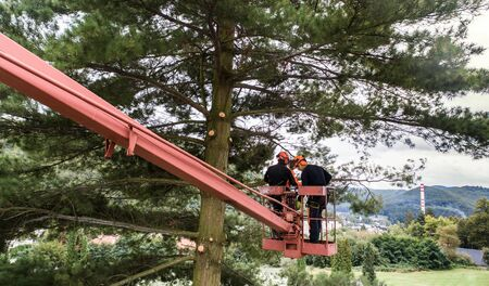 Two arborist men with chainsaw and lifting platform cutting a tree. Banco de Imagens