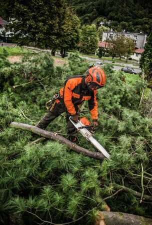 Unrecognizable lumberjack with chainsaw cutting tree branches in town.