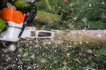 Close-up of lumberjack with chainsaw cutting a tree, midsection.