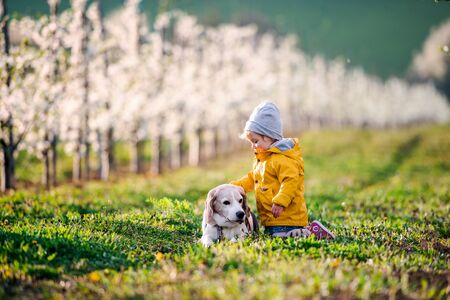 A small toddler girl with a dog in orchard in spring.