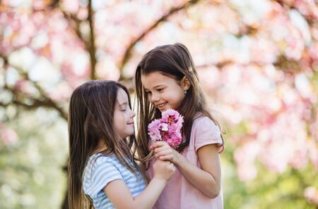 Two small girls standing outside in spring nature, holding flowers. 版權商用圖片