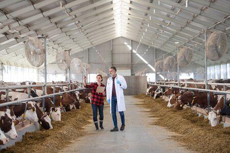 Una mujer gerente y médico veterinario en la granja de diario, industria agrícola.