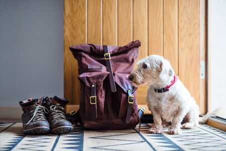 Pair of boots, backpack and a dog sitting by open front door. Stock Photo