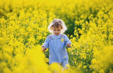 Front view of happy small toddler girl walking in nature in rapeseed field.