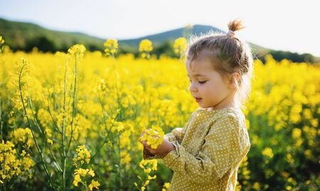 Side view of happy small toddler girl standing in nature in rapeseed field. Standard-Bild