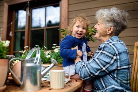 Senior grandmother with small granddaughter gardening on terrace in summer. 免版税图像