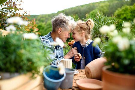 Senior grandmother with small granddaughter gardening on balcony in summer, eating. 免版税图像
