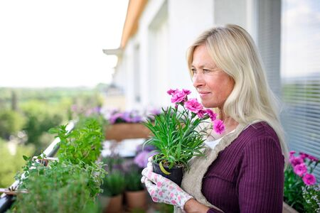 Senior woman gardening on balcony in summer, holding potted plant.