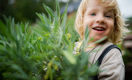 Close-up portrait of small boy outdoors in garden, sustainable lifestyle concept. 스톡 콘텐츠