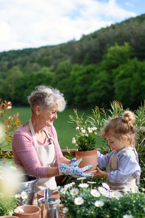 Senior grandmother with small granddaughter gardening on balcony in summer.