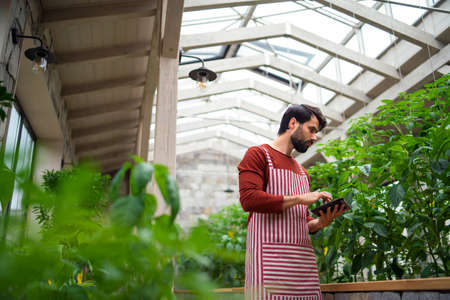 Man gardener with tablet standing in greenhouse, working.