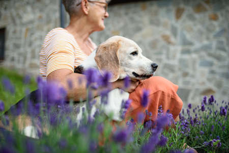 Portrait of senior woman with dog sitting outdoors in garden, pet friendship.