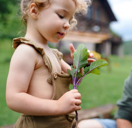 Small girl helping with working in vegetable garden, sustainable lifestyle.