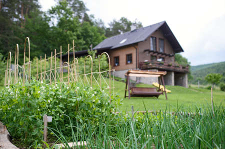 Vegetable garden in the backyard in the countryside, sustainable lifestyle. Foto de archivo