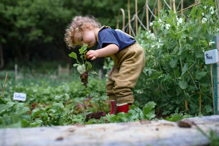 Portrait of small girl working in vegetable garden, sustainable lifestyle.