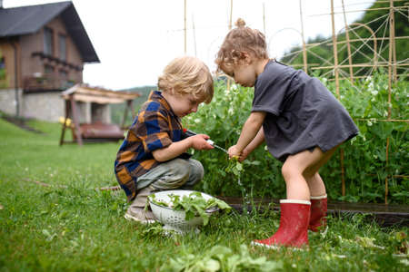 Two small children in vegetable garden, sustainable lifestyle. Foto de archivo