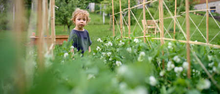 Portrait of small girl walking in vegetable garden, sustainable lifestyle.