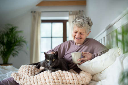 Happy senior woman with cat resting in bed at home. Foto de archivo