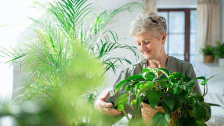 Happy senior woman looking after potted plants at home.