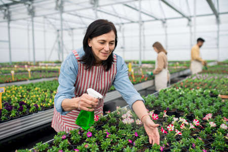 Portrait of people working in greenhouse in garden center, woman spraying plants with water.