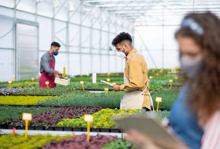 People working in greenhouse in garden center, coronavirus concept. Reklamní fotografie