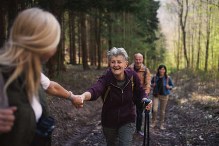 Group of seniors hikers outdoors in forest in nature, walking.