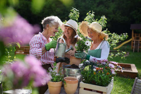Senior woman friends planting flowers together outdoors in community garden. 免版税图像