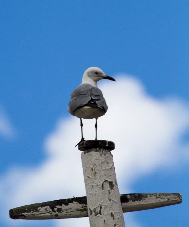 clowds: Gull on lookout Stock Photo