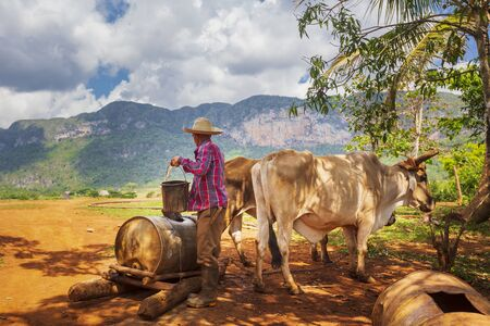 Vinales, Cuba - March 26 2019: Farmer with work clothes drawing water from old well in Vinales National Park, UNESCO, Pinar del Rio Province, Cuba