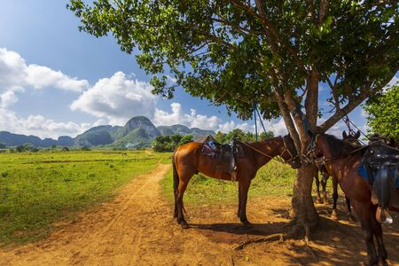 Vinales National Park, UNESCO, Pinar del Rio Province, Cuba, West Indies, Caribbean Central America