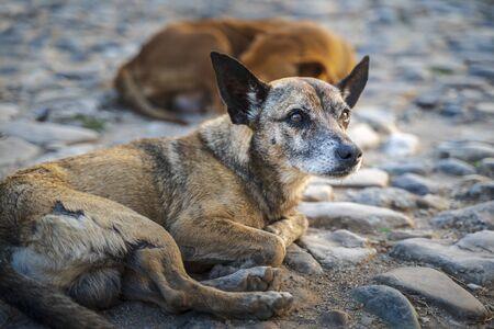 Dog in the colonial district of Trinidad, Sancti Spiritus, Cuba, West Indies, Central America